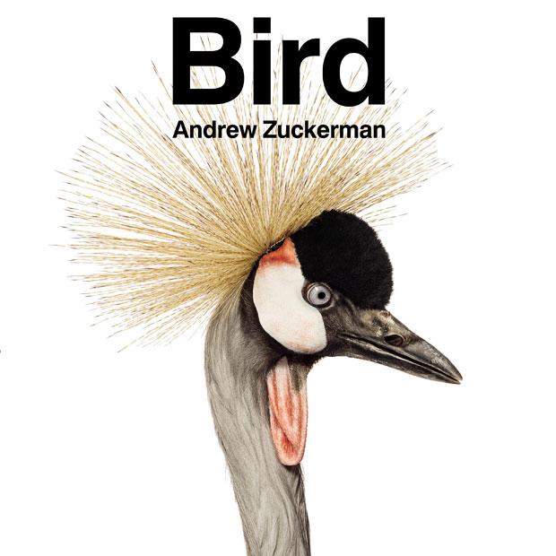 Bird by Andrew Zuckerman-cover